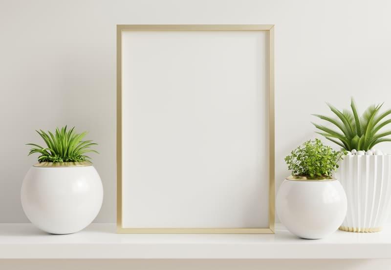 plantas-resistentes-para-hogar
