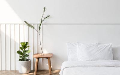 Plantas resistentes y duraderas para nuestro hogar